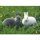 สินค้างานฝีมือ-ครอสติสลายกระต่ายน้อย