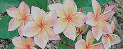 ชุดปักครอสติส ดอกไม้